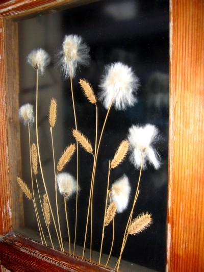 フィンランド・ヘルシンキ/ラッピ/ガラスに挟まれた雑草.jpg