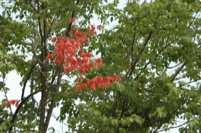 季節外れの桜の花.JPG