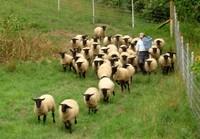 羊飼いのおっさん.jpg