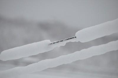 電話線に付いた雪DSC_0438.jpg