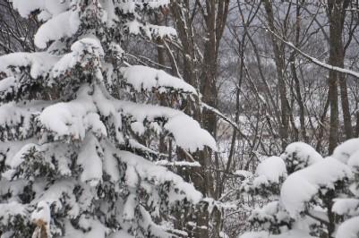 2008年ほぼ初雪で、根雪.jpg