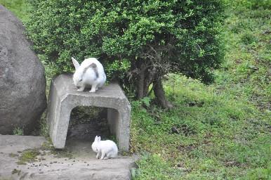 2009.0731ウサギの親子.jpg