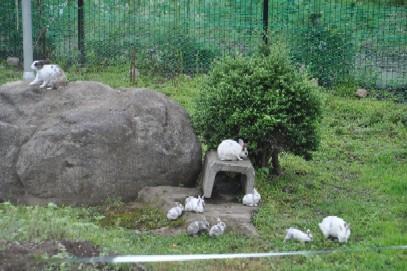 2009.0800ウサギの親子DSC_2033.jpg
