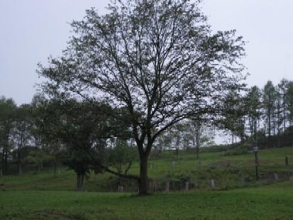 2009.0819朝4時の牧場風景.jpg