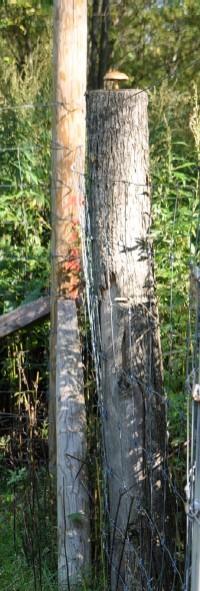 2009.0923牧柱の茸DSC_2735.jpg