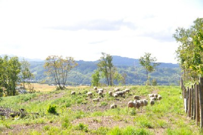 2009.0926羊と遭遇DSC_2669.jpg