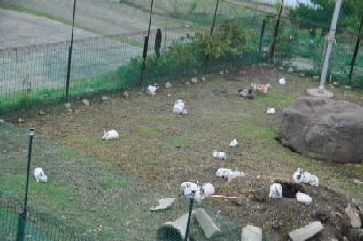 2009.1026ウサギと鴨DSC_3356.jpg