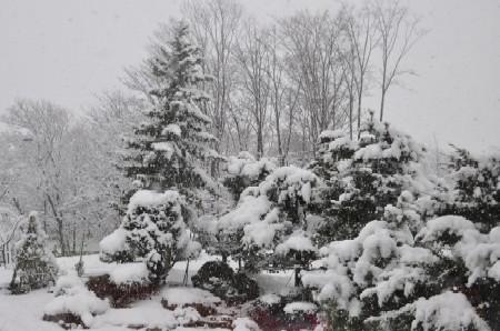 2011.0417雪DSC_6021.jpg