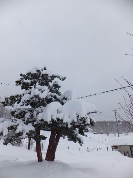 2011.1226大雪DSCF1143.jpg