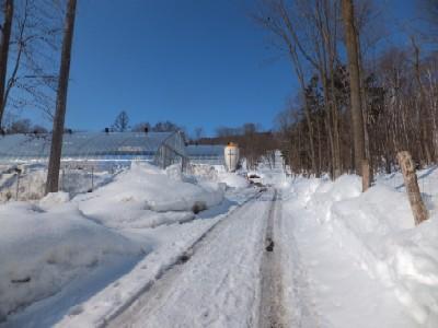 2012.0328雪解けまでとおい牧場DSCF3006.jpg