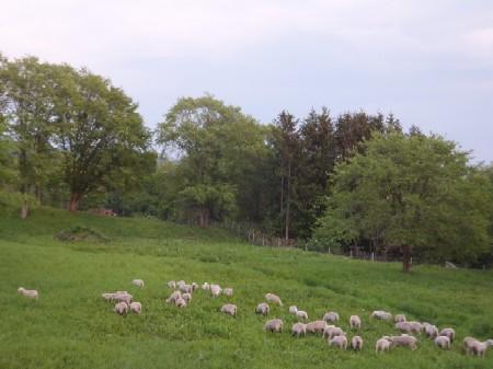 2012.0525本場放牧風景DSCF3759.JPG