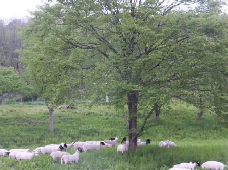 2012.0528放牧風景DSCF3803.JPG