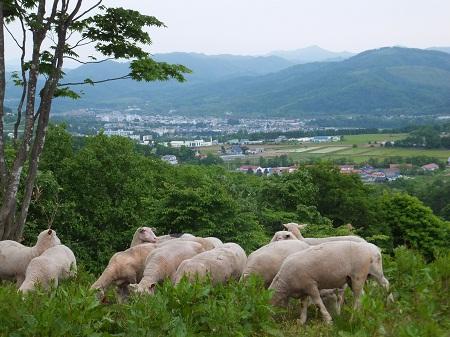 2012.0616羊が赤平市を見ているDSCF4095.jpg