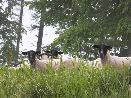 2012.0619食べるに追いつかない牧草の伸びDSCF4023.jpg