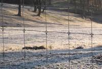 2010.1121霜が降りたIMG_3485.jpg