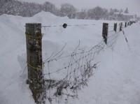 2011.0117壊された牧場の柵IMG_3952.jpg