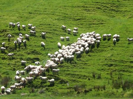nzめん羊牧場DSCF6671.jpg