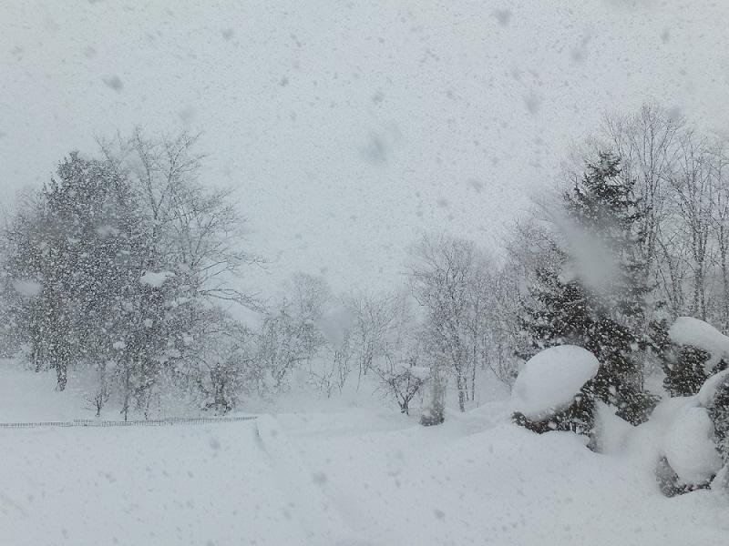 013.0125大きな雪DSCF1231