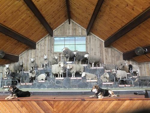 2013.0611羊のドームショーDSCF3083