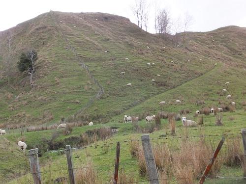 2013.0612急坂の羊たちDSCF2978