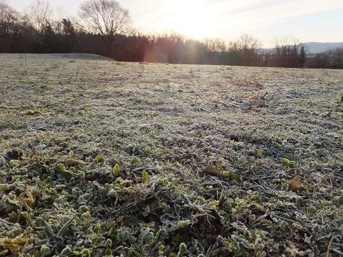 2013.1125牧場に霜が降りるDSCF7669