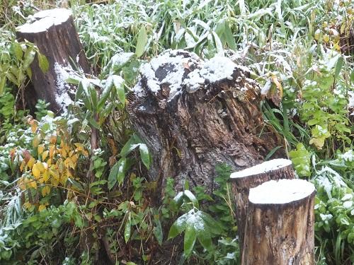 2014.1028初雪DSCF2383