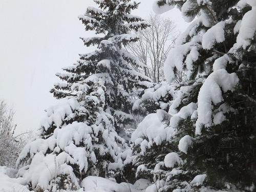 2014.1114いよいよ根雪かDSCF2531