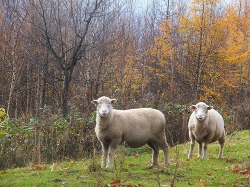 2014.1107羊の秋DSCF2471
