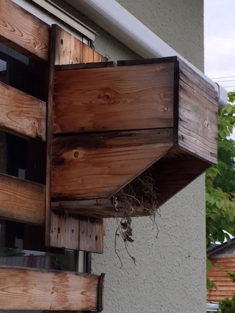 2015.0530鳥の巣箱IMG_0862