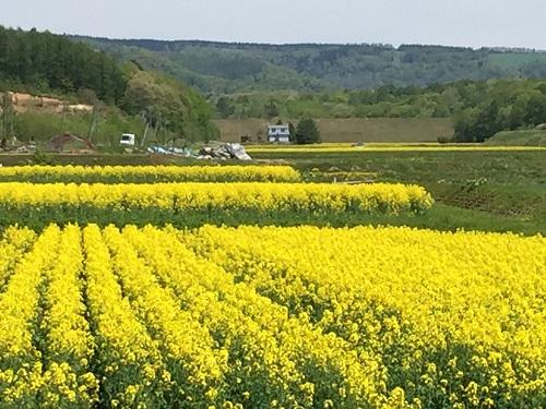 2015.0518菜の花景色IMG_0817
