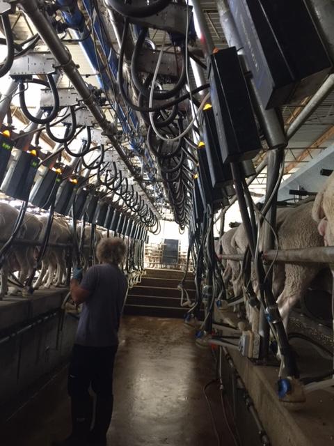 2016.0223羊のチーズIMG_1657