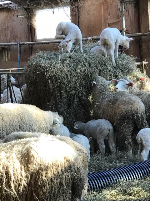 2017.0313羊の登山IMG_1274
