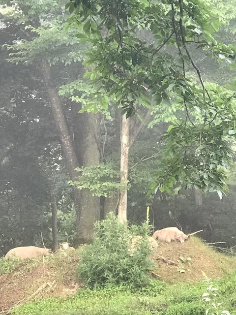 2017.0717木陰の羊IMG_2879