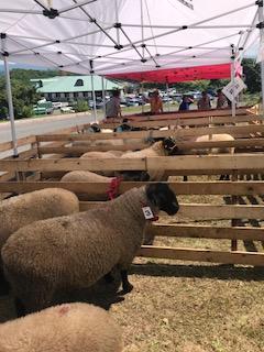 2017.0820羊まつり3IMG_3401