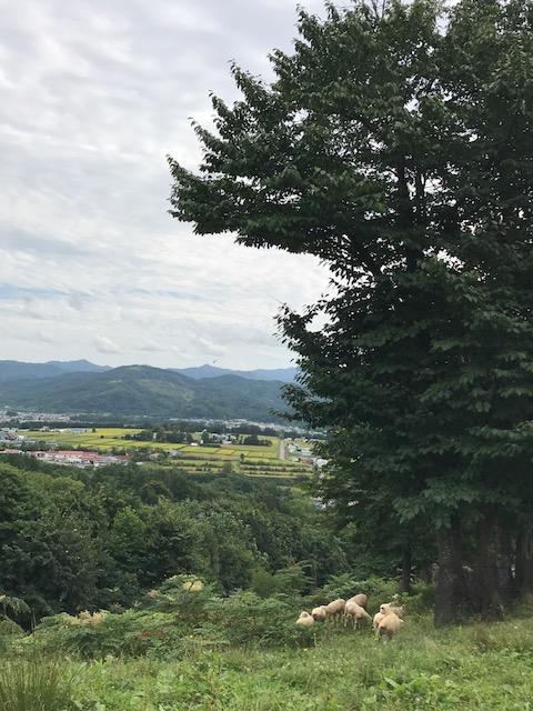 2017.0903ひつじIMG_3499