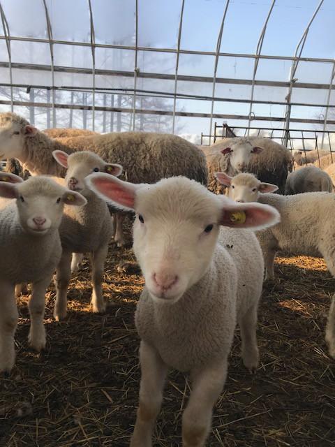 2018.0405子羊IMG_6357