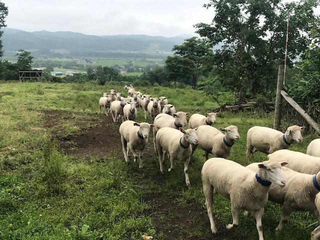 2018.0712羊1_7553